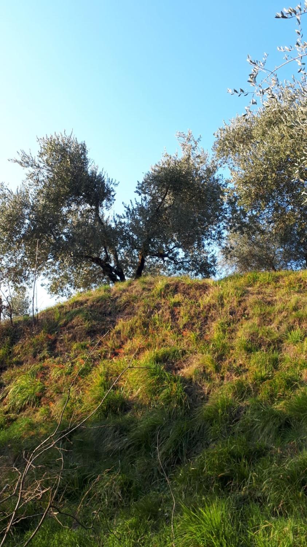 agriturismo con alloggio Fulet Abbadia Lariana Lecco9 2500x1500 - FARM